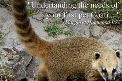 Coati Keeper