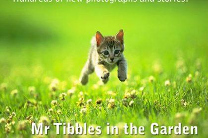 Cute Kitten Stories
