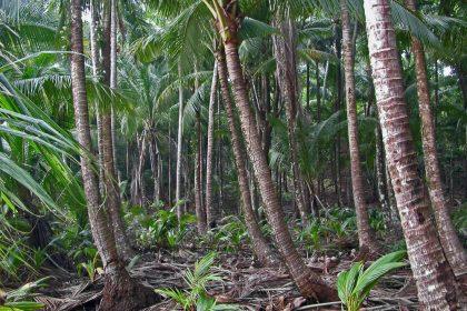 Panama island forest
