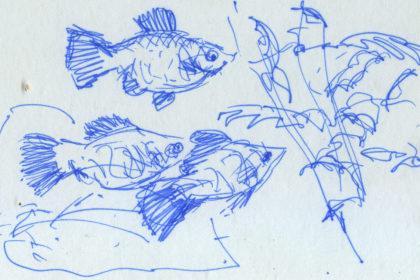 drawing53
